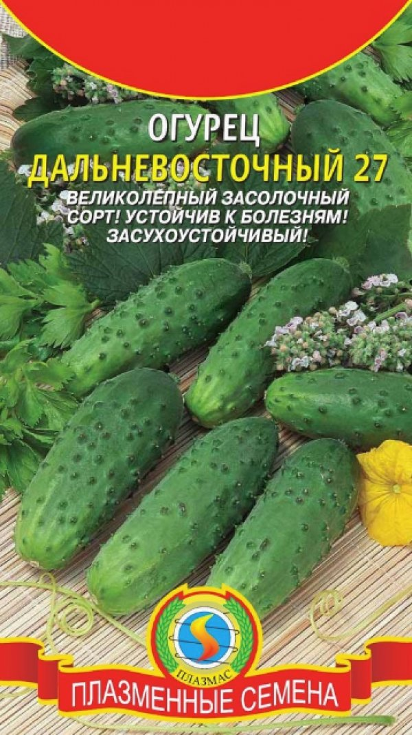 Характеристика и описание дальневосточного огурца его выращивание