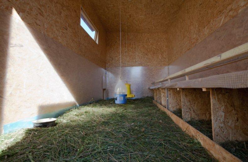 Использование трав в курятнике