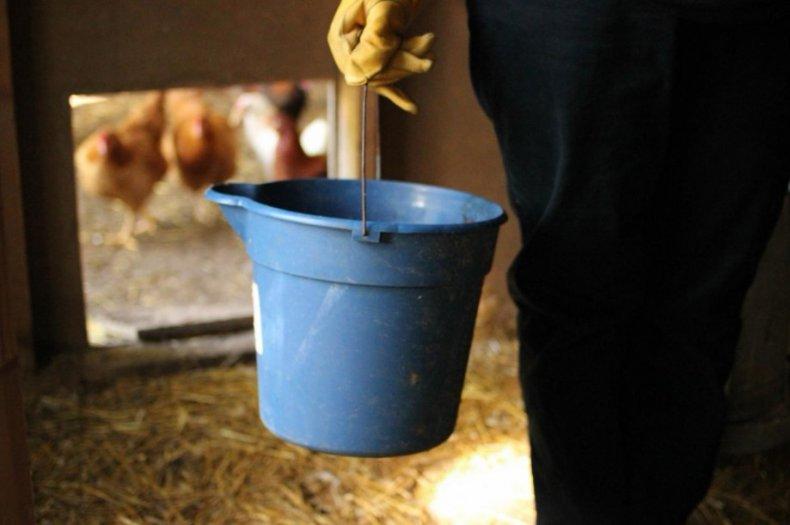 Болезни кур-несушек зимой симптомы, лечение в домашних условиях
