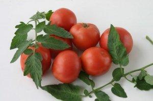 Сорт поражается фитофторой