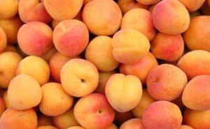 Самые лучшие сорта абрикосов