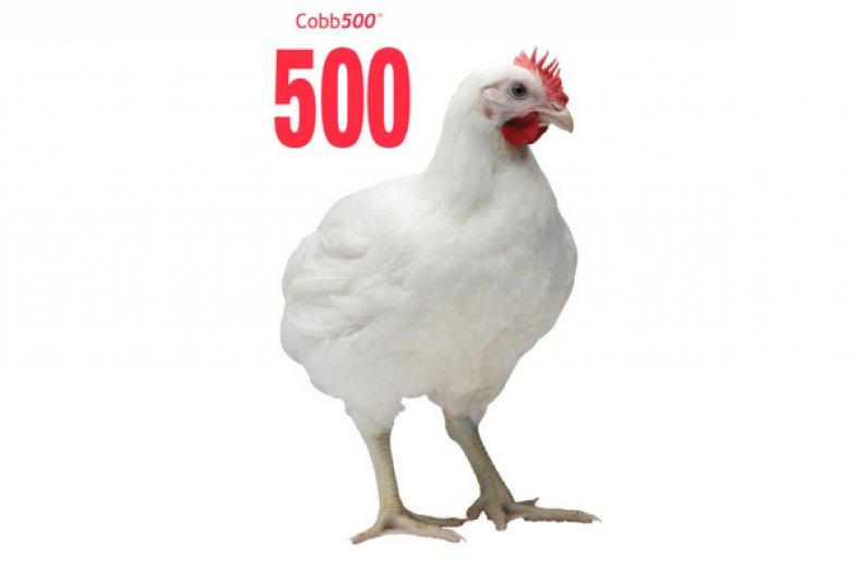 Кобб 500