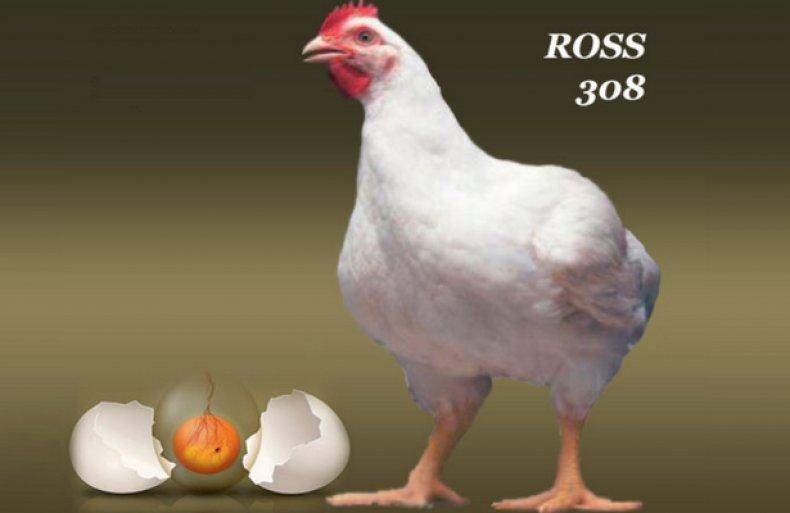 Росс 308