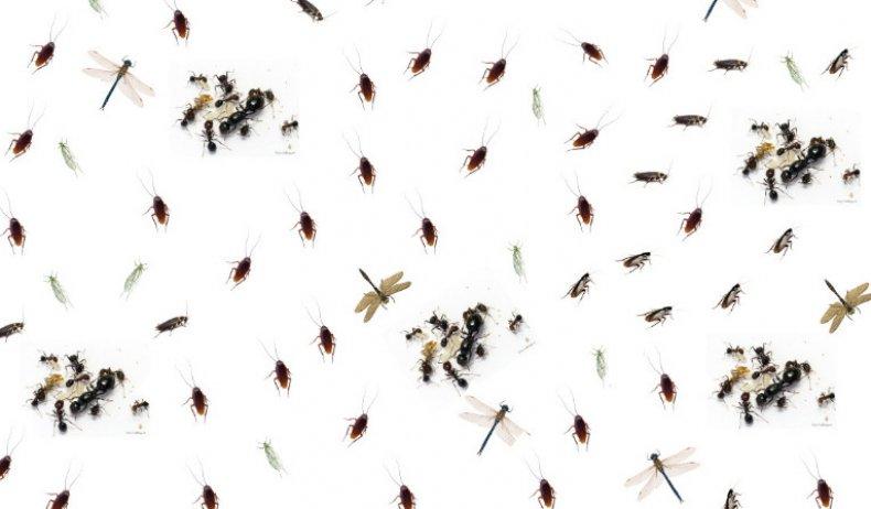 Мелкие насекомые