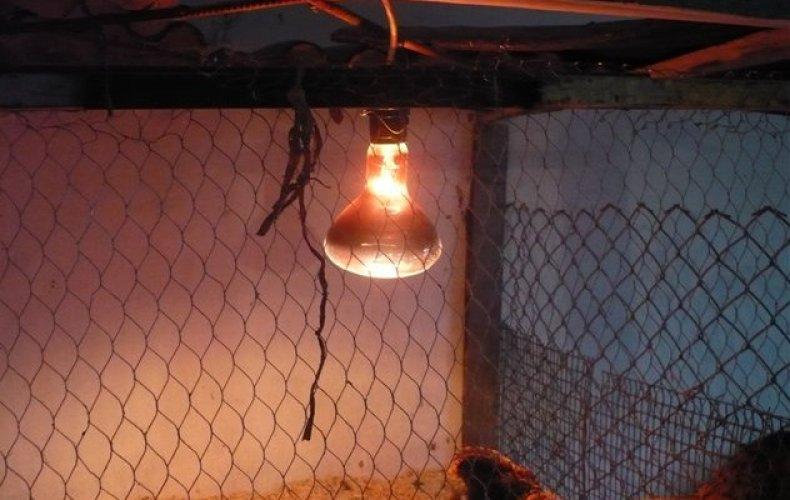 какую лампу выбрать для курятника