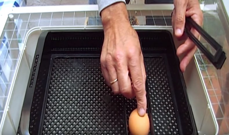 Закладка яиц в инкубатор «Janoel 24»