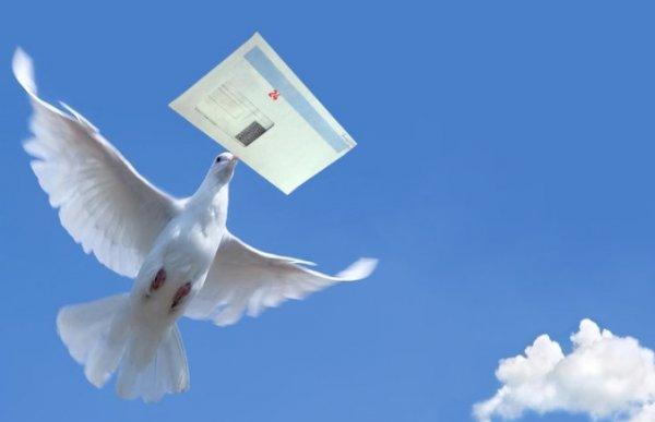 Немецкие почтовые голуби описание
