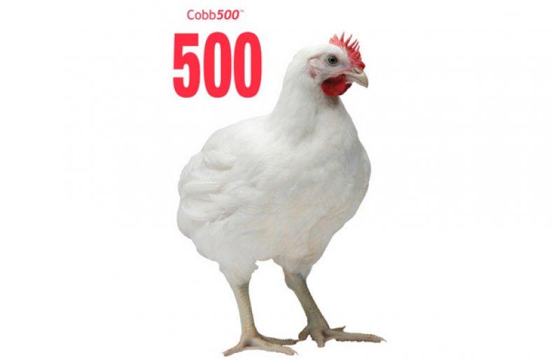 КОББ-500