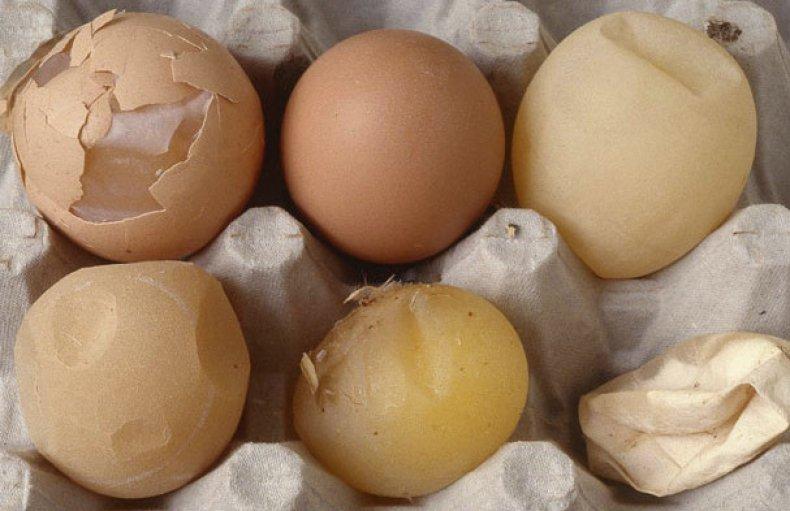скорлупа, куриный, яйцо, причина, кормить