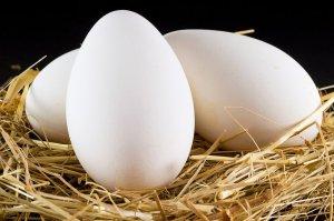 Можно ли есть гусиные яйца жареные
