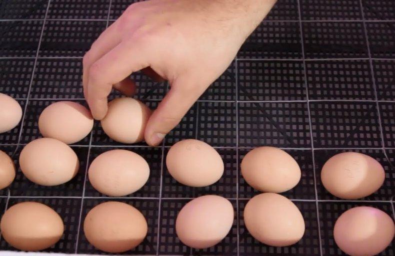 сколько раз переворачивать яйца в инкубаторе вручную