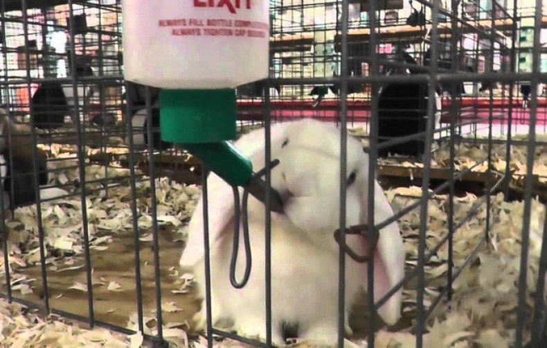 Вода для кроликов