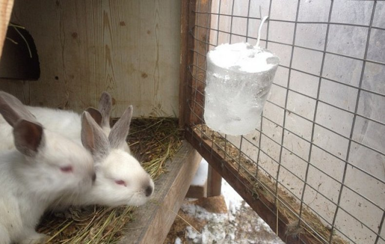 Лед для кроликов