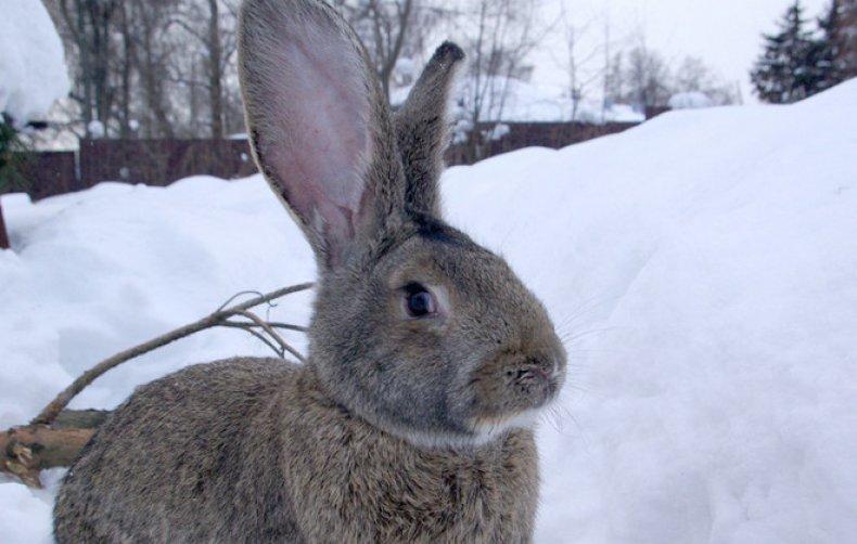 Снег для кроликов