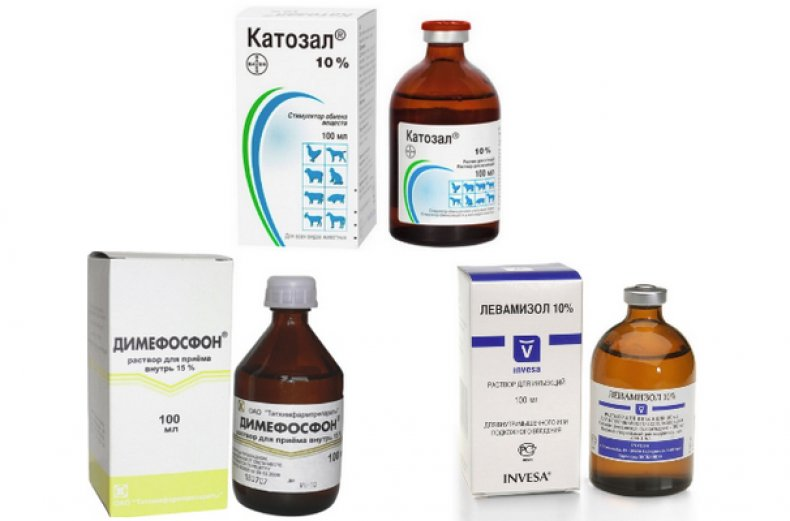 стресс, курица, стрессовых факторов, введения вакцины, препаратов выделяют, процессе перемещения