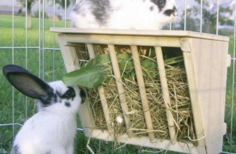 Кролик кушают из кормушки
