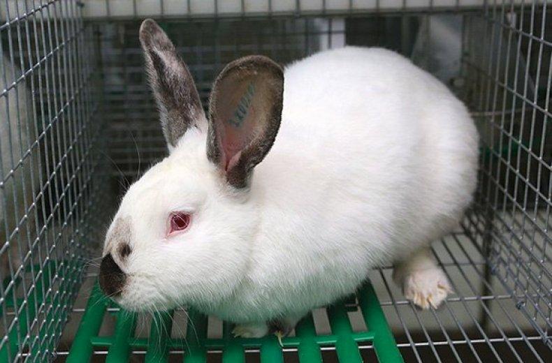 Кролик Хиплус