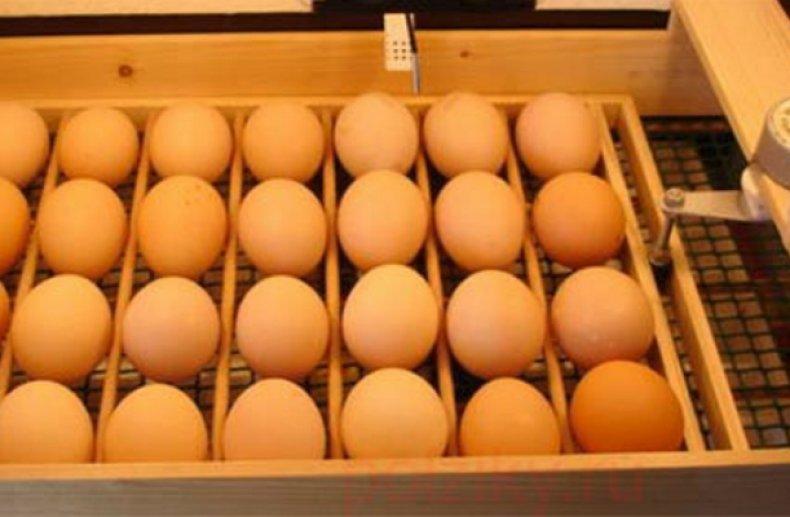 Закрепляющиеся элементы в лотке для яиц