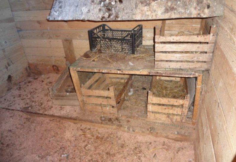 осенней посадке как сделать гнездо для индюшки фото короткую поездку