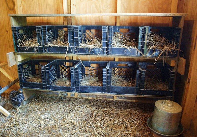 Гнезда для цесарок