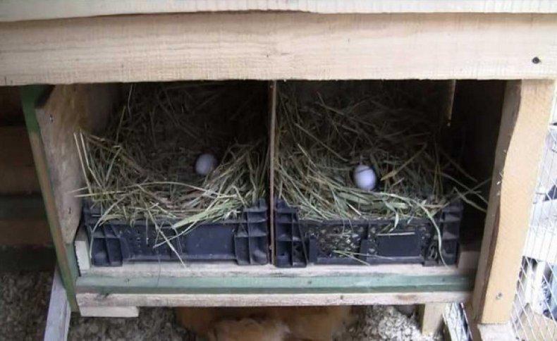 Гнездо для цесарок