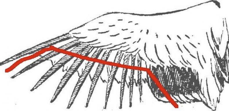 Схема подрезания крыла