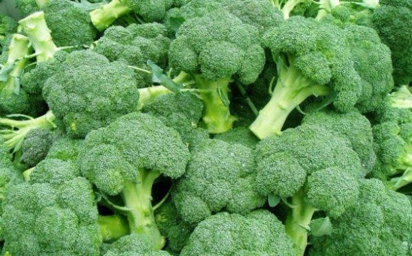 Названия лучших семян капусты брокколи с описанием