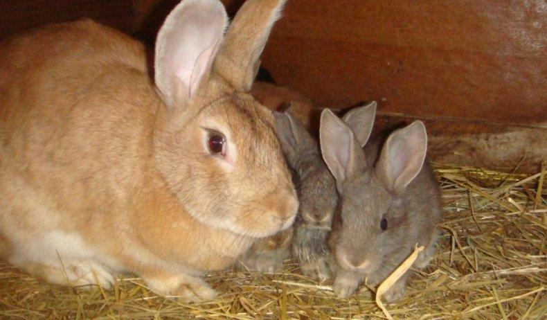 Крольчиха с кроликами