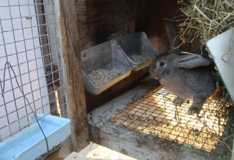 Сетчатый пол в крольчатнике