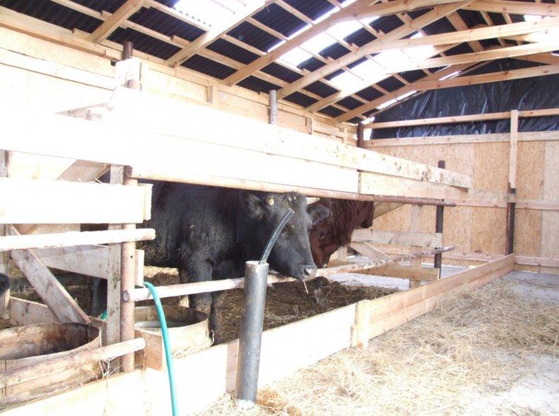 сфотографировала загон для откорма бычков фото фиалки обмельчали