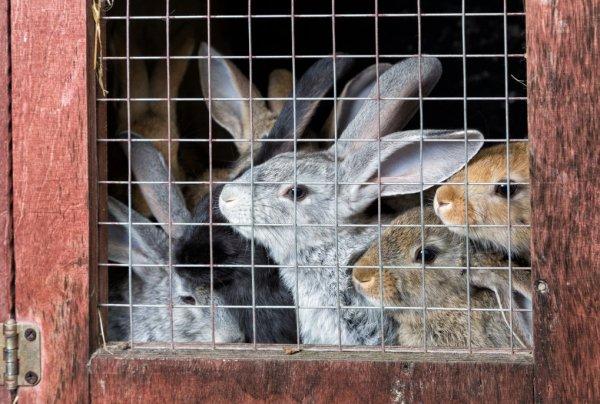 Клетки для кроликов своими руками