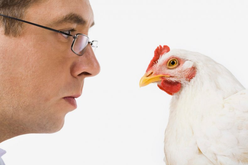 курица, закрыться, опухнуть, глаз