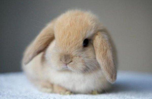 Чем можно кормить декоративных домашних кроликов