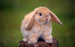 Байтрил» для кроликов дозировка, инструкция по применению