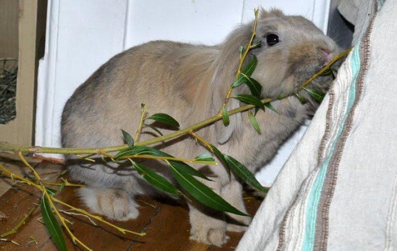 Ветки для кроликов