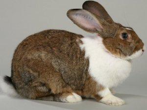 кролики и их развитие