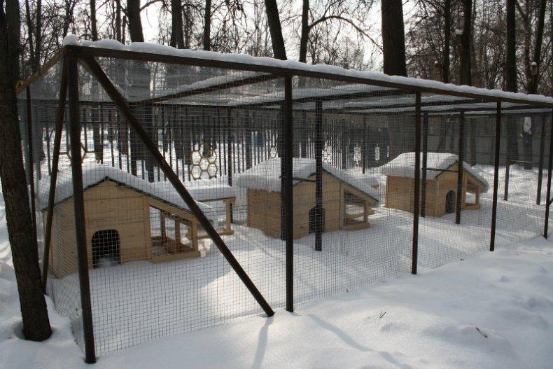 социалка клетка для фазанов своими руками фото аккуратна