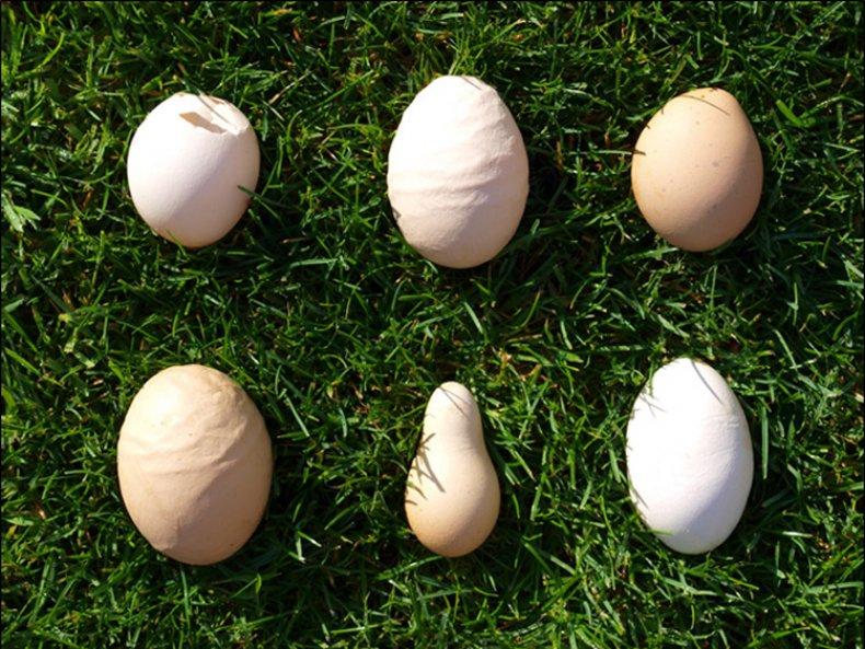Деформация яиц