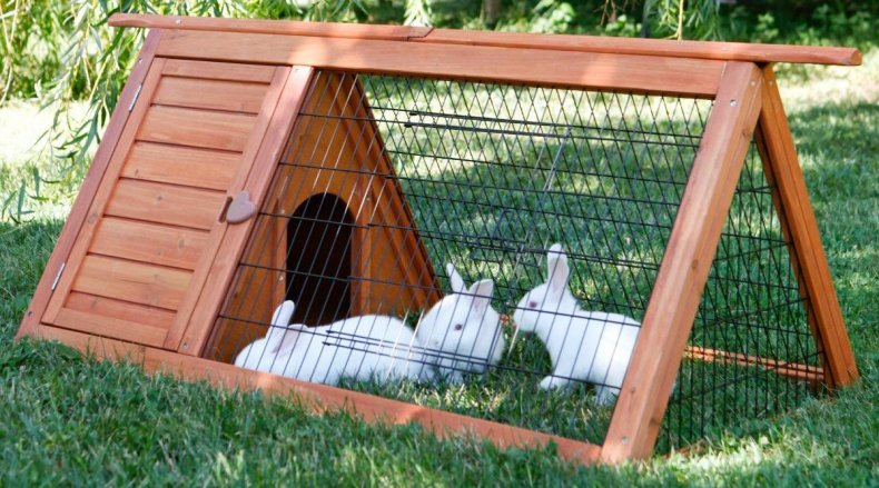 Вольер для кроликов