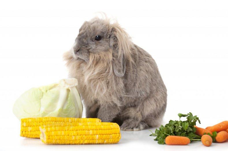 ушной, клещ, кролик, лечить