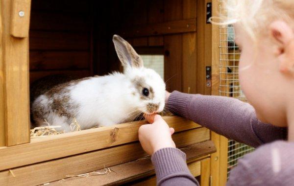 Чем дезинфицировать клетки кроликов в домашних условиях?