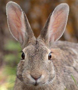 Препараты от глистов для кроликов