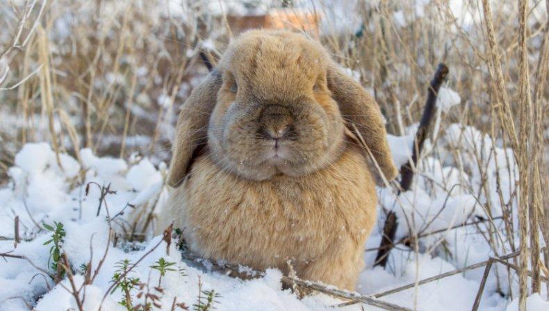 Температура для новорожденных крольчат