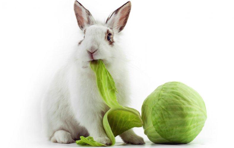 Кролик кушает капусту