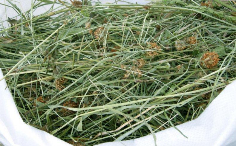 Сухая трава для кролика