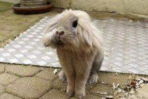 Болезни лёгких у кроликов причины, симптомы, лечение
