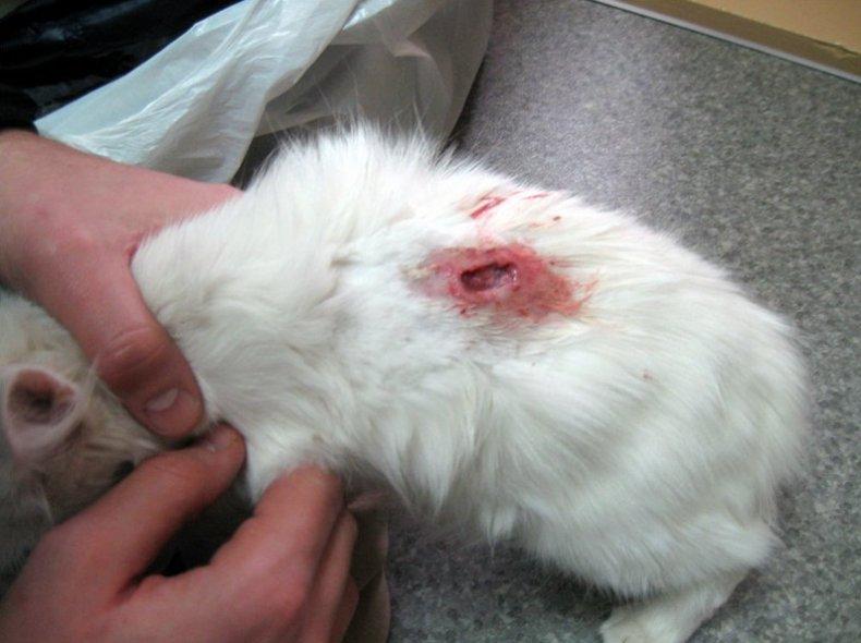 кожные заболевания кроликов