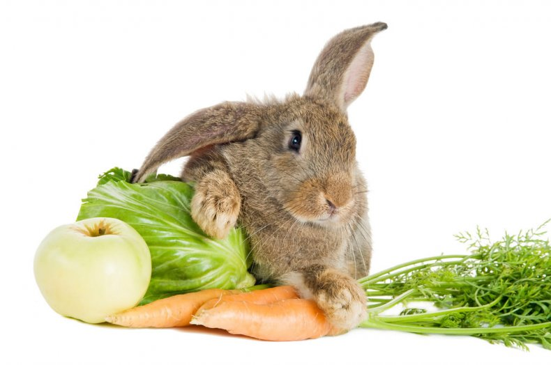 кожный, заболевание, кролик, фото