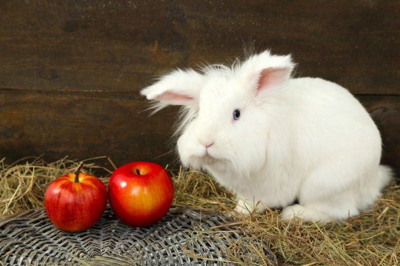 Декоративный кролик кушает фрукты