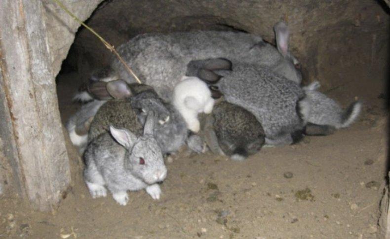 разведение, кролик, выращивание, содержание, кормление